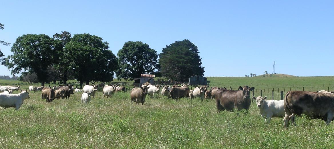 Let More Overseas Investors Buy Australian Farms: Report