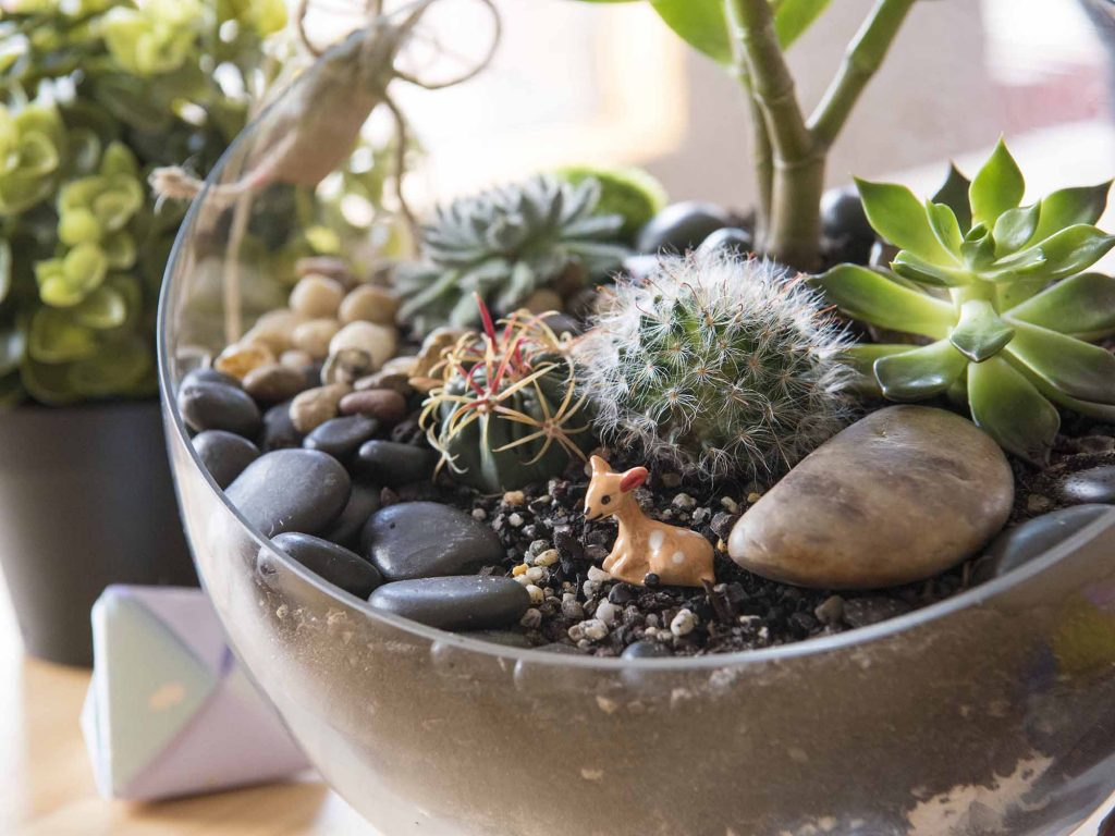 These Are Three Of The Best Easy Care Miniature Plants Iproperty