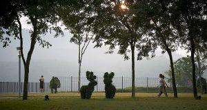 Resident-walking-in-Linear-Park twin palms