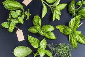 herb-gardening-malaysia-