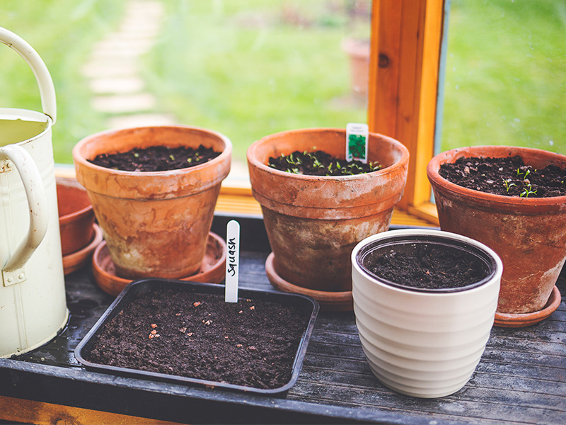 Mistake 4: Choosing the wrong type of soil for your indoor plants