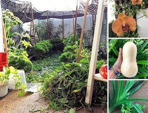 Daphnes-garden