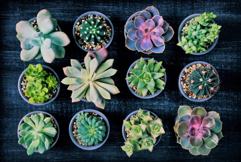 Different succulents