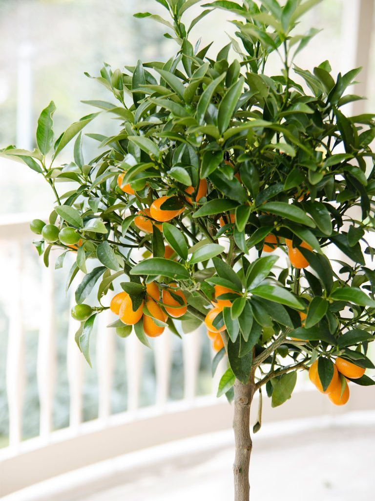 Complete guide to growing fruit trees in pots - iproperty com my