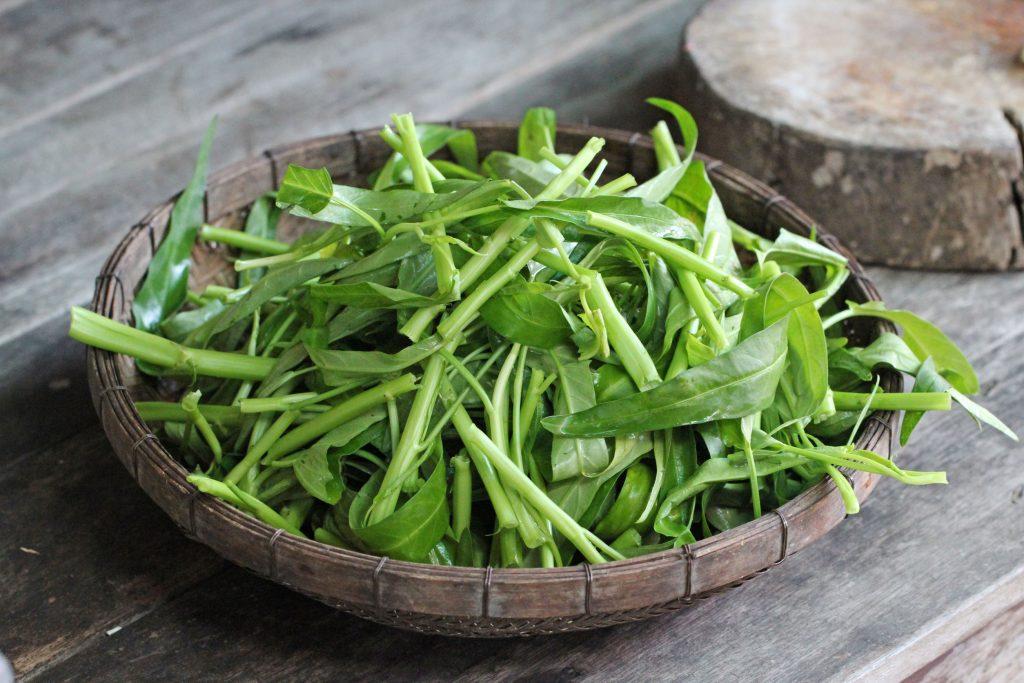 kangkung tanaman mudah ditanam