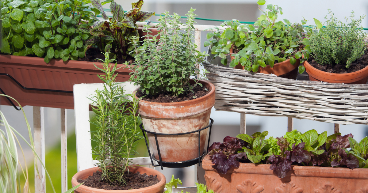 11 Easy Edible Plants You Can Grow On Your Balcony Garden Iproperty Com My