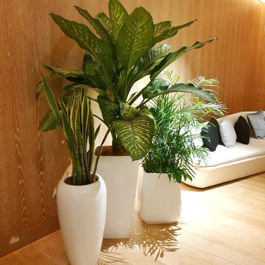 Tip Untuk Menyusun Tanaman Hiasan Di Dalam Rumah Menurut Pakar Tumbuhan Iproperty Com My
