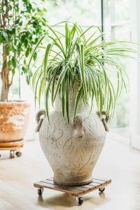 cosy-home-interior-design-with-house-plants-at-window-spider-plant