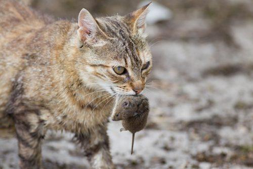 petua-mesra-alam-untuk-hapuskan-serangga-dan-haiwan-perosak