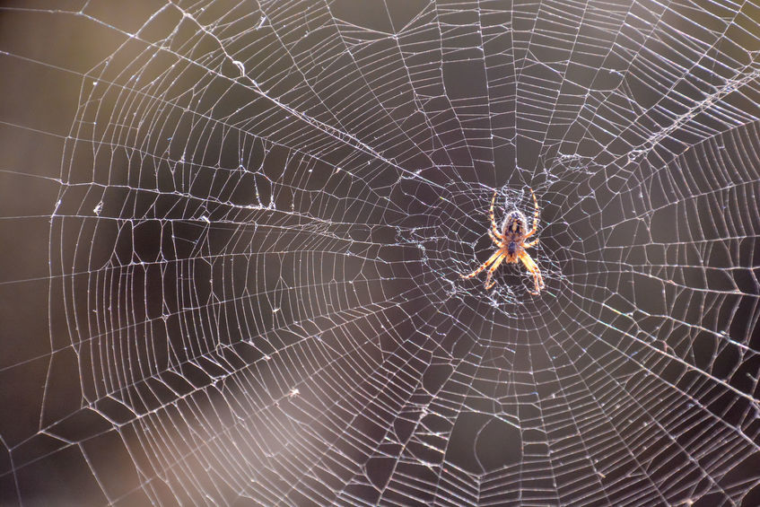 petua hapuskan labah-labah
