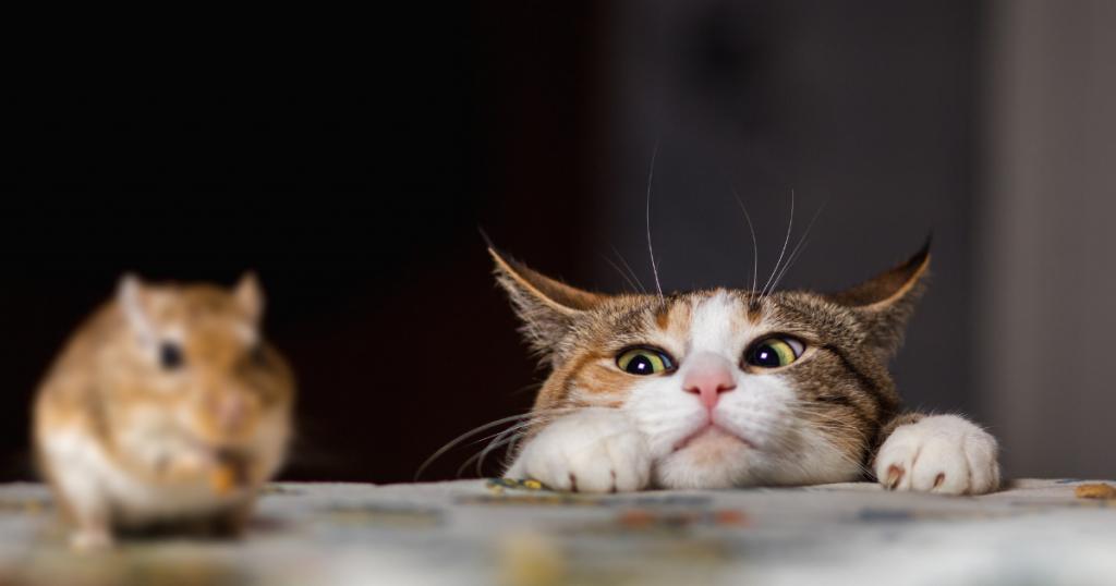 Cara halau tikus dari rumah dengan bela kucing