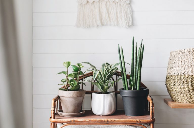 Stylish green plants in pots on wooden vintage stand on backgrou