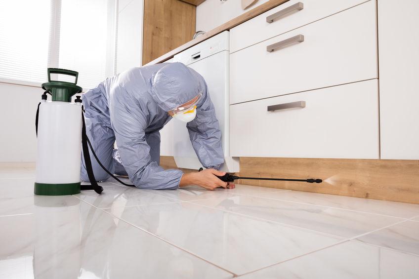 Halau tikus dari rumah dengan servis kawalan serangga perosak