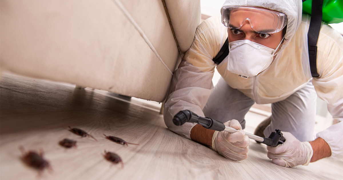 Pest control for houses in Malaysia: know when it's time to call an expert