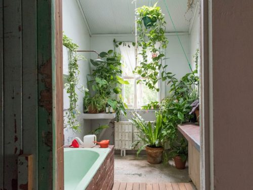 bathroom with indoor plants