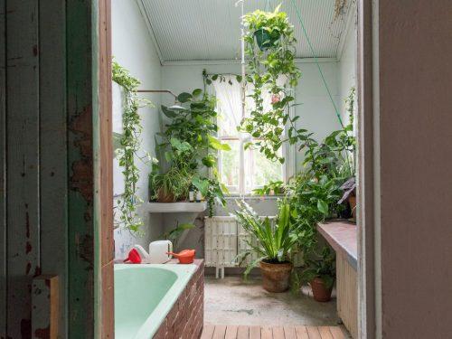 bathroom with indoor plants