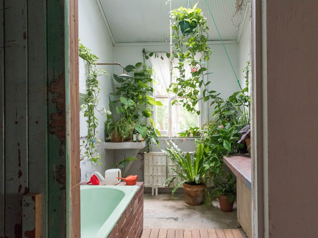 5 Best Indoor Plants To Grow In Your Bathroom Iproperty Com My