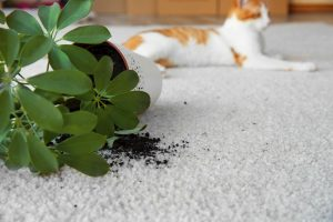 Overturned house plant and cute cat on light carpet