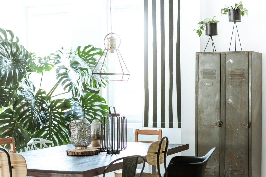 indoor plants at home plant nurseries in kl