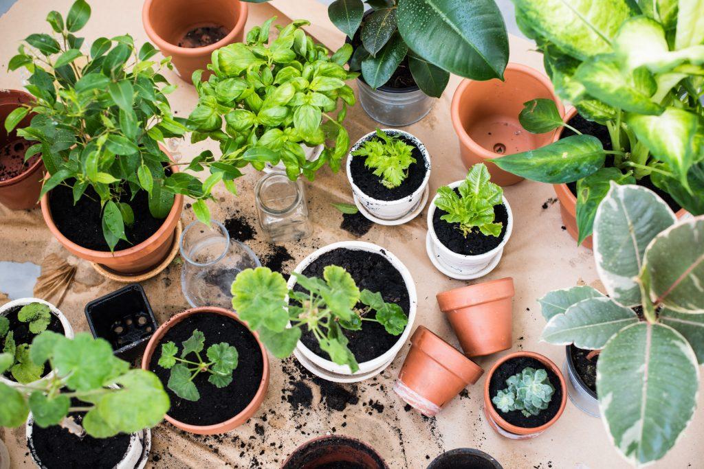 indoor garden plant nurseries in kl