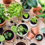 plant-nurseries-in-klang-valley