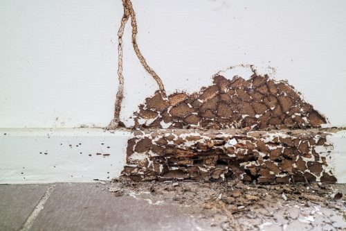 damaged wall caused by termites