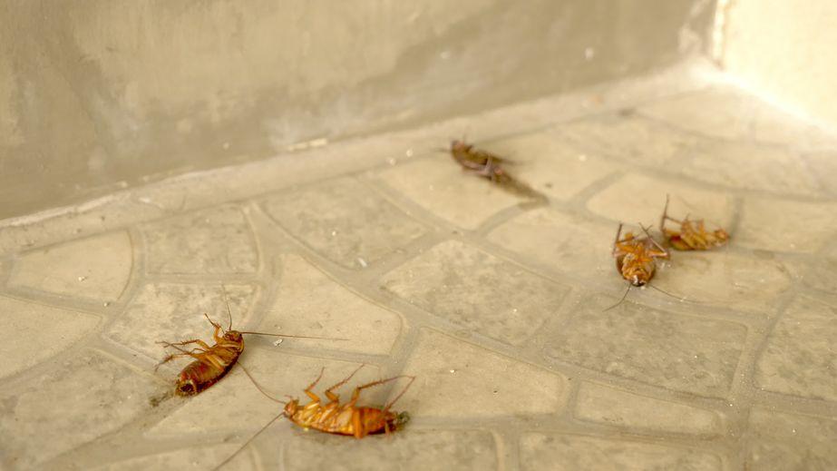 servis-kawalan-serangga-perosak-lipas