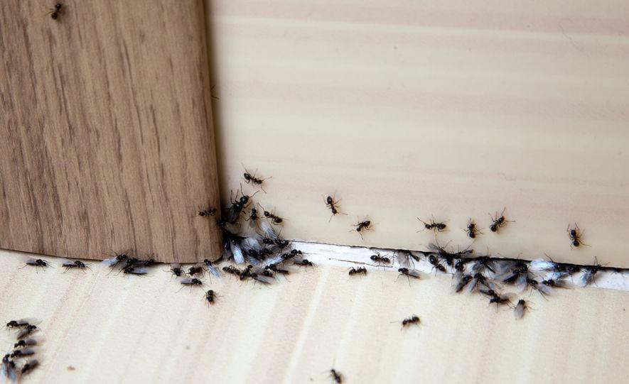 servis-kawalan-serangga-perosak-4