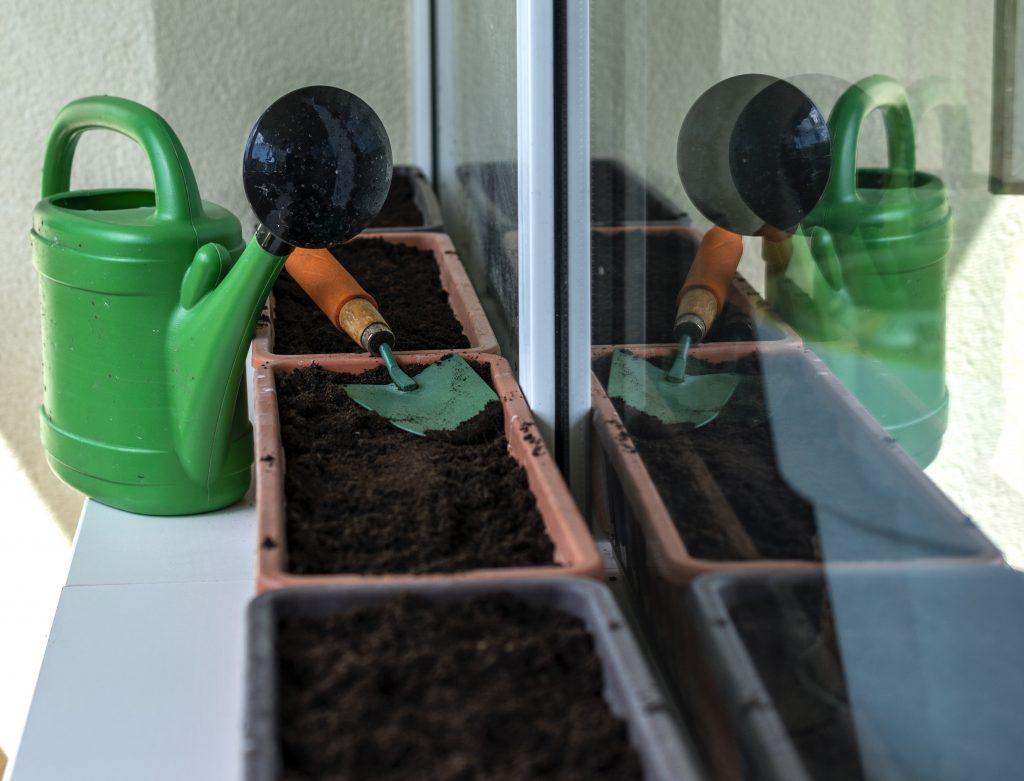 tanaman mudah ditanam