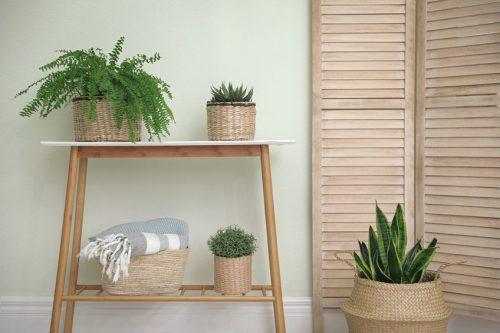 top-indoor-plants-2021