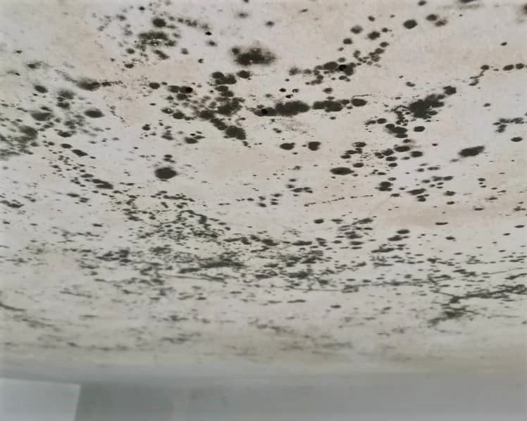 Mould-Contamination-inter-floor-leakage