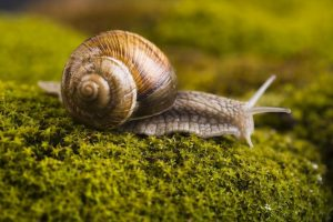 how-to-get-rid-of-snails-in-garden