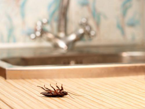 摆脱蟑螂的方法