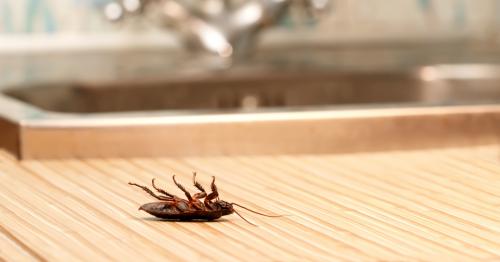 摆脱蟑螂方法