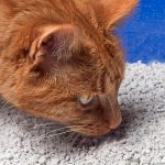 cara elak kucing kencing merata dan hapuskan bau hancing
