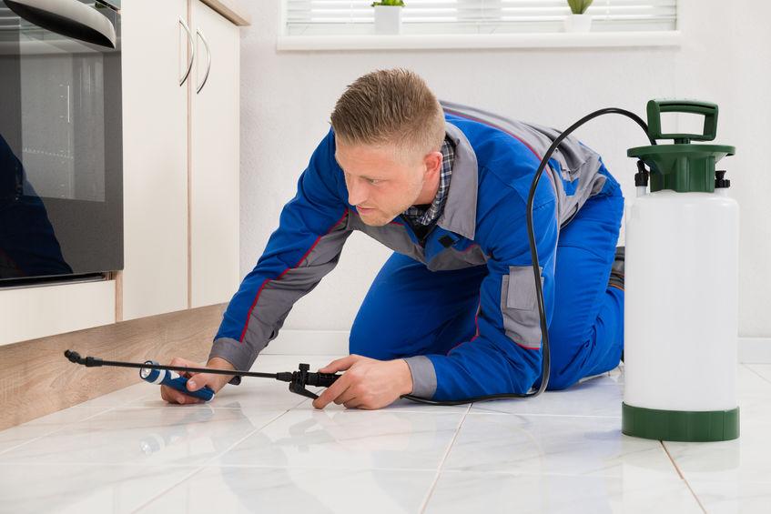 gunakan khidmat professional untuk halau serangga perosak
