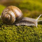11种简单技巧让你消除院子里讨人厌的蜗牛和蛞蝓