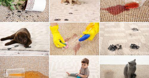 How do I clean my carpet myself?