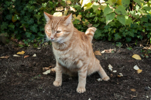 ways-to-stop-cats-from-pooping-in-your-front-yard