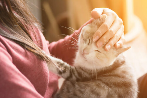 best-pet-shops-in-malaysia